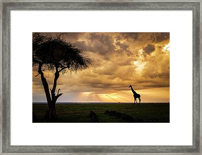 The Plains Of Africa Framed Print