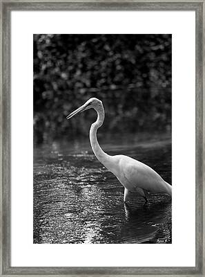 The Portrait Framed Print