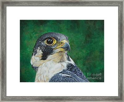 The Proud Peregrine....fastest Creature On The Planet Framed Print