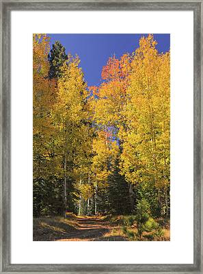 The Road A Little Less Traveled Framed Print