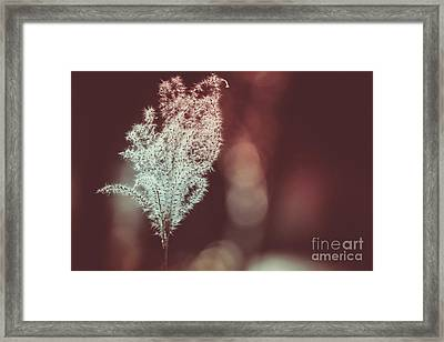 The Shine Framed Print