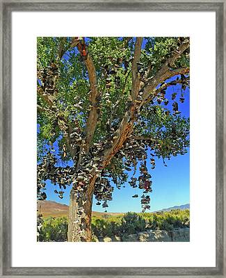 Framed Print featuring the photograph The Shoe Tree by David Bailey