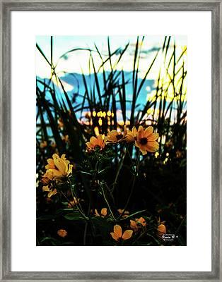 The Sunflower's Sunset Framed Print