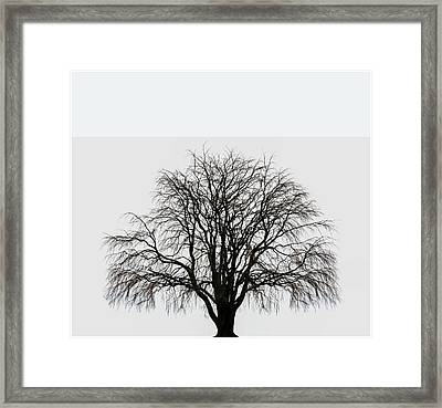 Framed Print featuring the photograph The Tree By The Side Of The Road by Jim Dollar