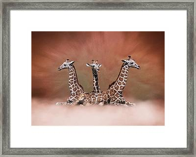 Framed Print featuring the digital art The Watchers - Three Giraffes by Debi Dalio