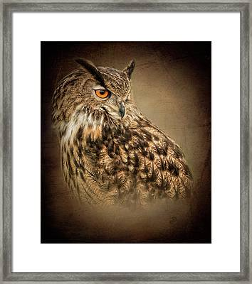 The Watchful Eye Framed Print