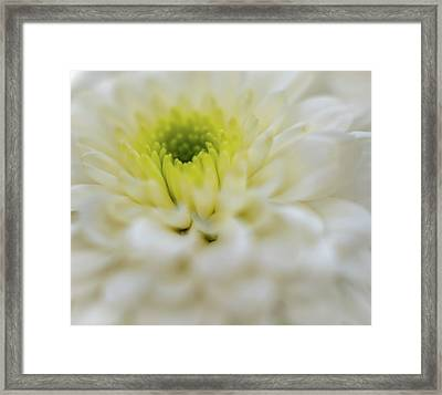 Framed Print featuring the photograph The White Flower by Francisco Gomez