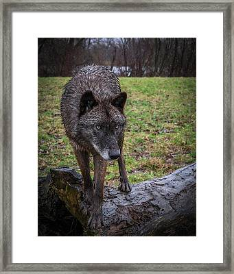 This Is My Log Framed Print