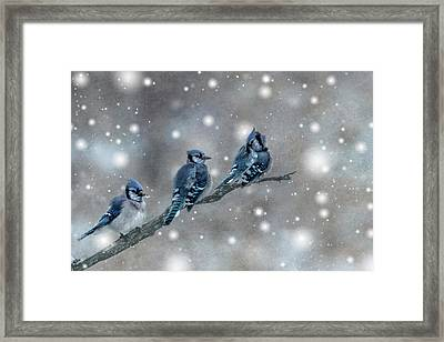 Three Blue Jays In The Snow Framed Print