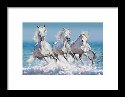 Andalusian Stallion Framed Prints