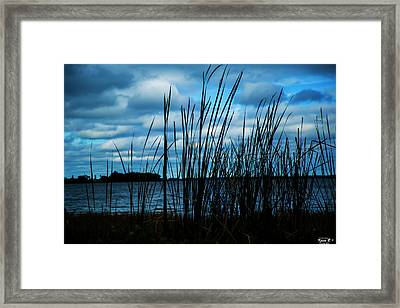 Through The Grass Framed Print
