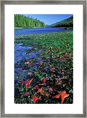 Tideppol Life, Burnaby Narrows, Gwaai Framed Print by Jerry Kobalenko