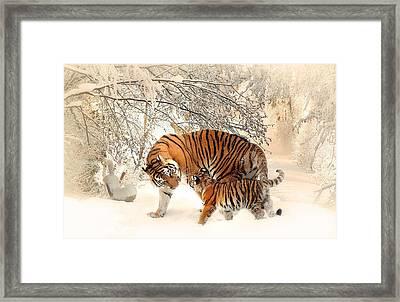 Tiger Family Framed Print