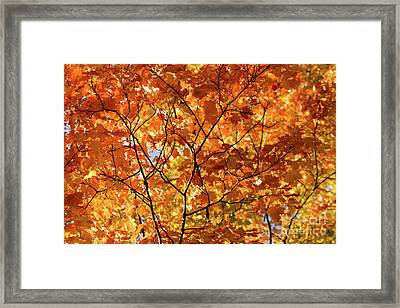 To Be Up In The Trees Framed Print