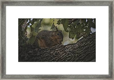 To Cute To Be Perfect 20181022 Framed Print