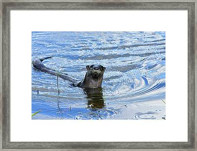 To My Otter Amazement Framed Print