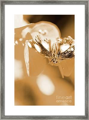Toned Tropics Framed Print