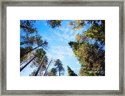 Framed Print featuring the photograph Towering Pines by Scott Kemper