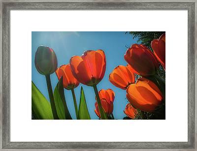 Towering Tulips Framed Print