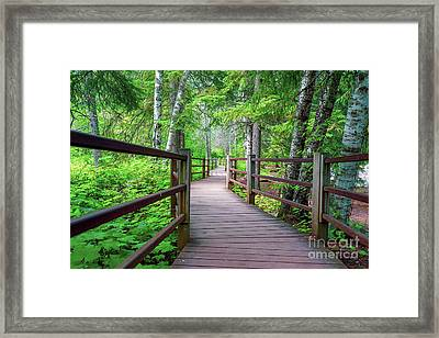 Trail At Gooseberry Falls Framed Print