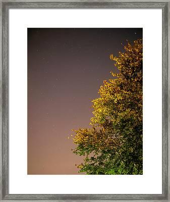Tree And Stars Framed Print