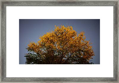 Tree And Stars Wide Framed Print