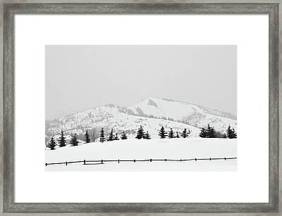 Tree Fence Framed Print by Dana Klein