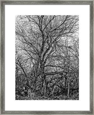 Tree In Nature Park / The Chair Project Framed Print