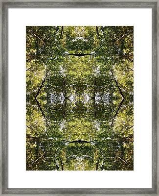 Tree No. 14 Framed Print
