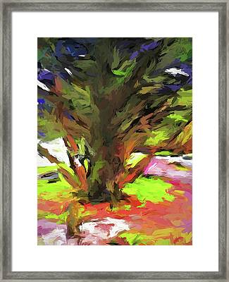 Tree With The Open Arms Framed Print