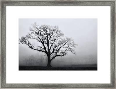 Trees In Fog # 2 Framed Print