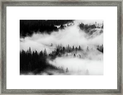 Framed Print featuring the photograph Trees In The Mist 1 by Stephen Holst
