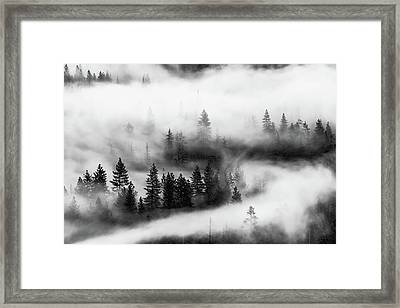 Framed Print featuring the photograph Trees In The Mist 2 by Stephen Holst