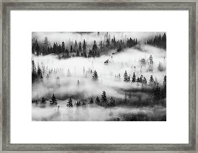 Framed Print featuring the photograph Trees In The Mist 3 by Stephen Holst
