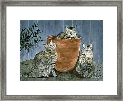 Tres Gatos Framed Print