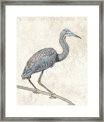 Framed Print featuring the photograph Tricolored Heron - Photographic Drawing by Dawn Currie
