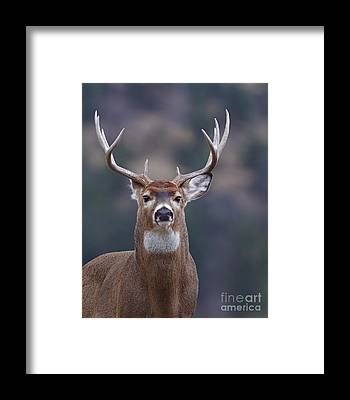 National Wildlife Refuge Framed Prints