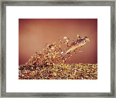 Trout Flying Out Of Bed Of Almonds In Pr Framed Print by John Dominis