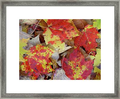 True Autumn Colors Framed Print