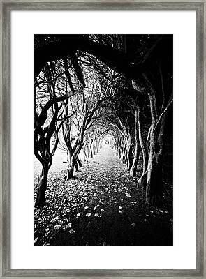 Tunnel Of Trees Framed Print by Michelle Mcmahon