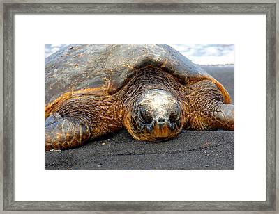 Turtle Rest Stop Framed Print