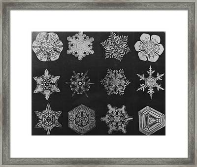 Twelve Snow Crystals Framed Print by Herbert