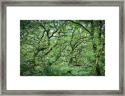 Twisted Forest Full Color Framed Print