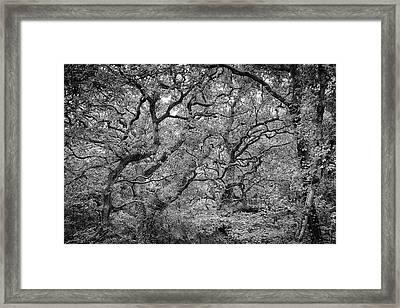 Twisted Forest Framed Print