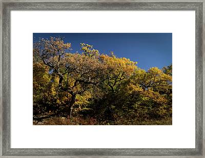 Framed Print featuring the photograph Twisted by Scott Bean