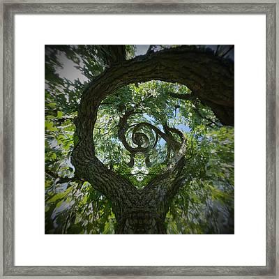 Twisted Tree Framed Print