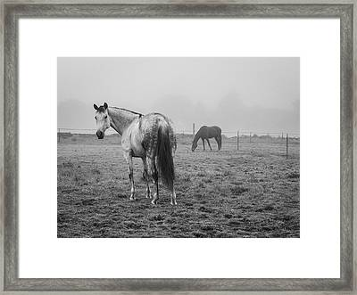 Framed Print featuring the photograph Two Horses Bw by David Gordon