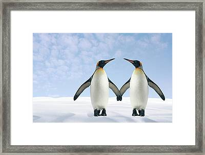 Two Penguins Holding Hands Framed Print by Fuse