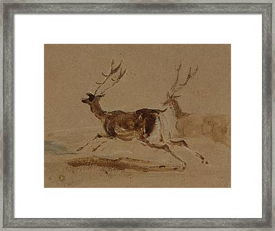 Two Stags Running Framed Print