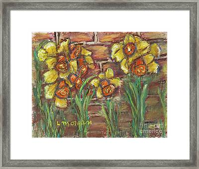 Two Toned Daffodils Framed Print
